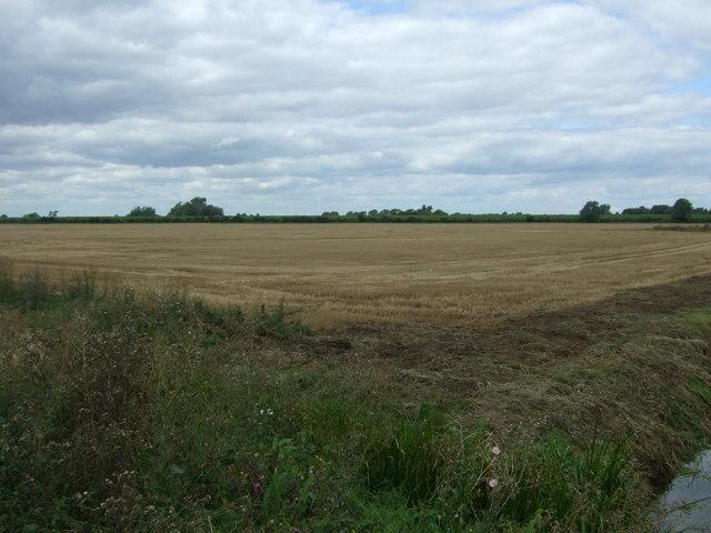 Stubble field, South Fen Farm