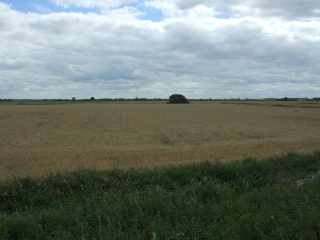 Cereal crop, South Fen