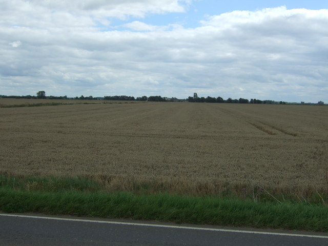 Cereal crop near Eight and Twenty Farm
