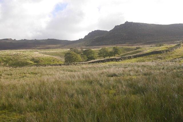 Rough grazing, Rylstone