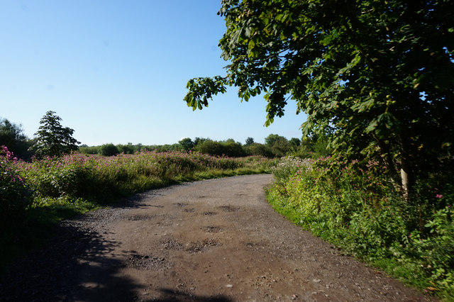 Track leading to Fulford Ings
