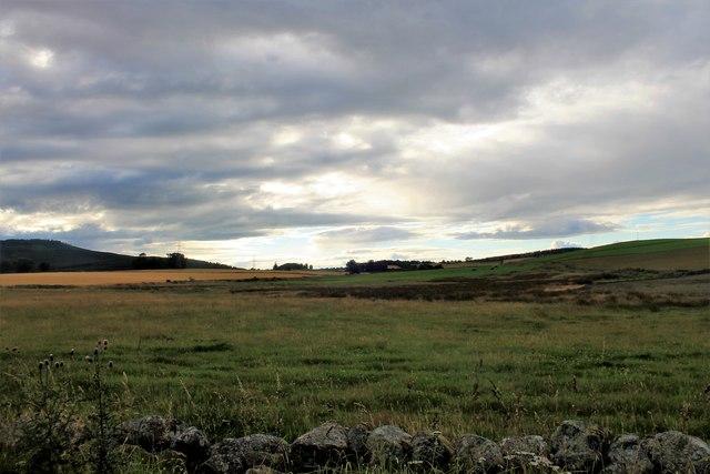 Grassland by West Mains