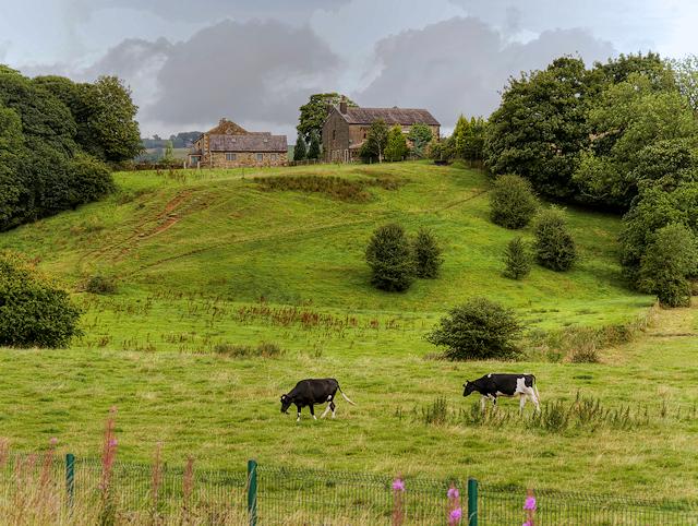 Farmland at Burrs