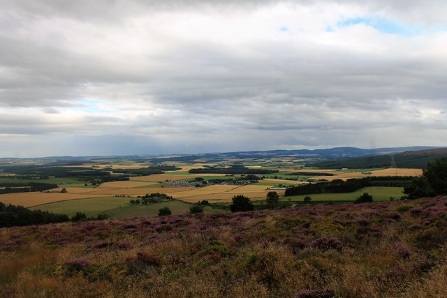 Heather on the South Slopes