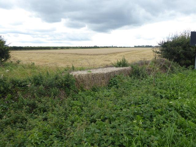 Caythorpe Heath