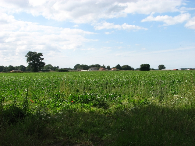 View towards Lambert's Farm from Allison Street