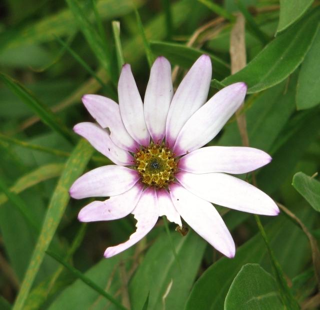 Pretty flower in Shepherd's Lane