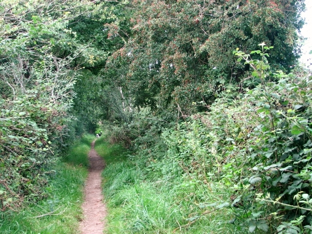 View north along Shepherd's Lane