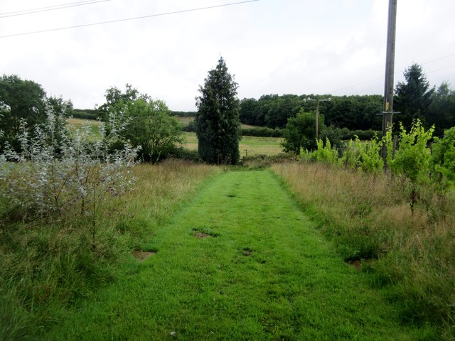 Footpath adjacent to vineyard