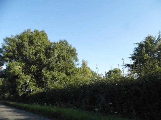 Trees by Oxford Road, Oakley