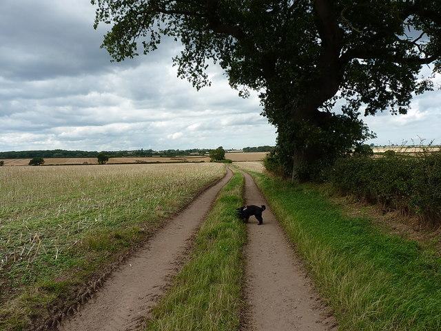 Shropshire Way north of Sugdon