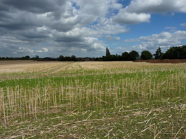 Harvested field west of Sugdon Farm