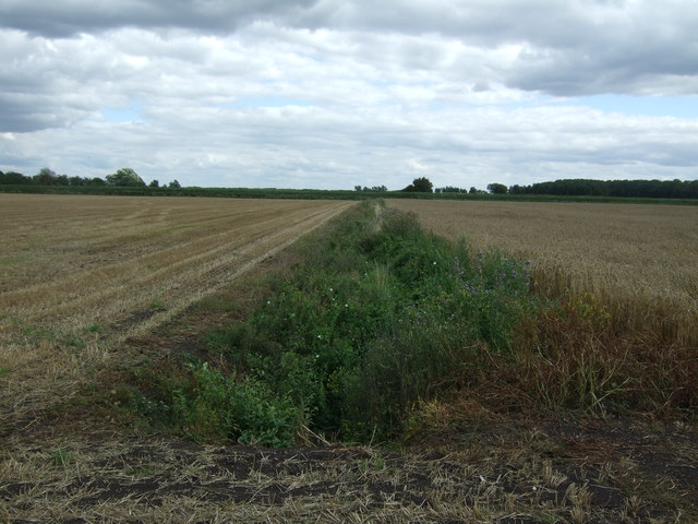 Overgrown drain, Ewell Fen