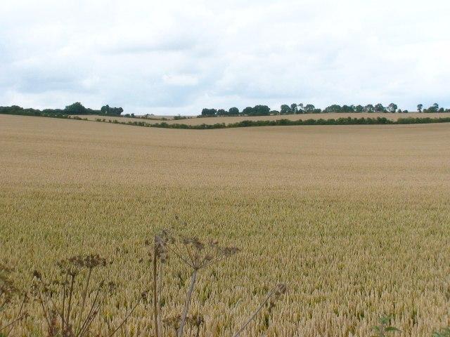 Farmland - Woodmancott Down