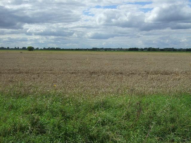 Cereal crop off Twenty Pence Road