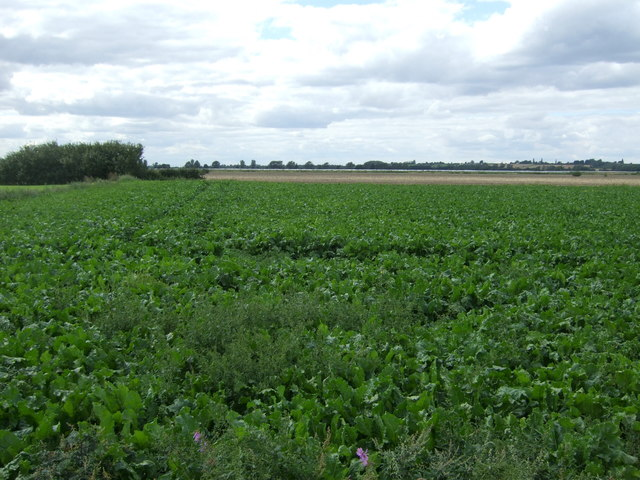 Crop field west of Twenty Pence Road