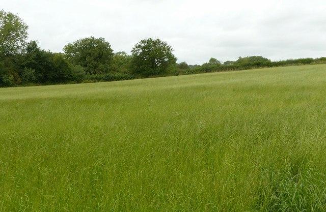 Field footpath near Ockbrook