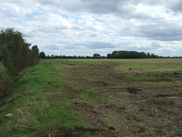 Field beside Alboro Close Drove