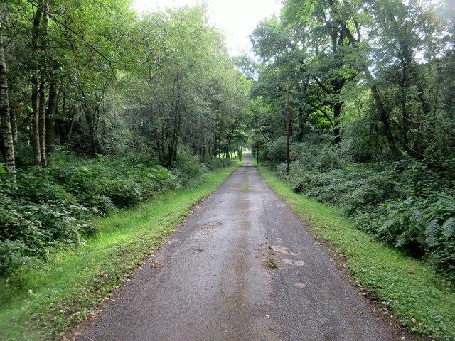 Lane to Blackwool Farm