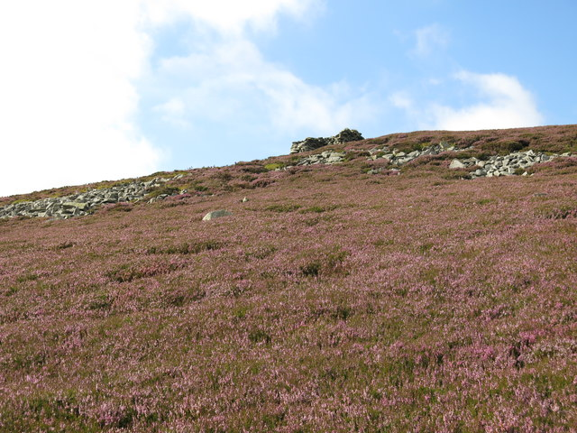 Heather and rock outcrops below Clevison Currick
