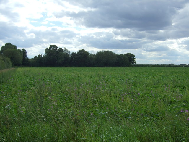 Crop field off Cottenham Road