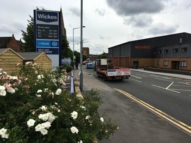Roses beside Mansfield Road