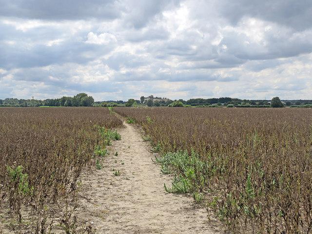 Path through beans