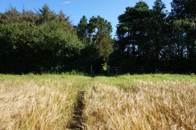 Path leading Heslington Common