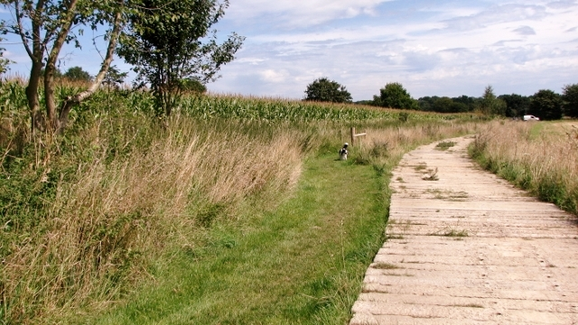 Footpath and farm track diverge