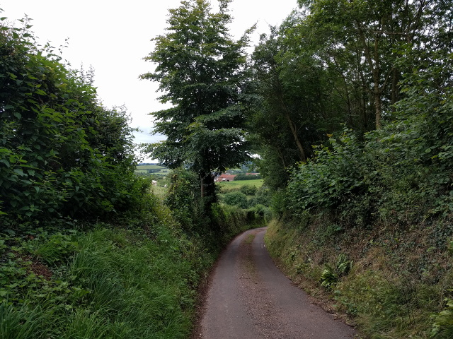 Lane heading away from Thorne St Margaret