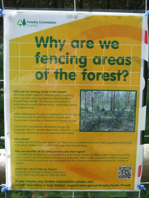Why are we fencing areas of the forest?