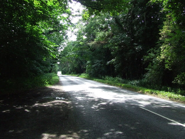 Forest Road Scene