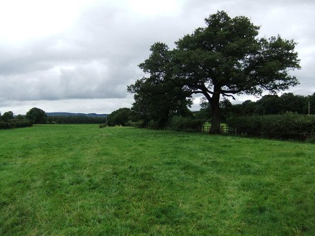 Fields near Great Strickland