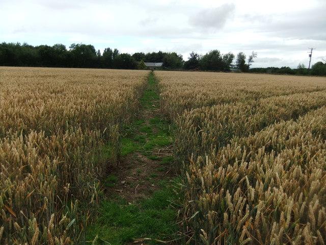 Path to Field Head
