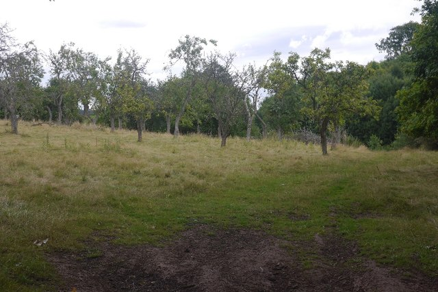 Orchard near Stanford on Teme