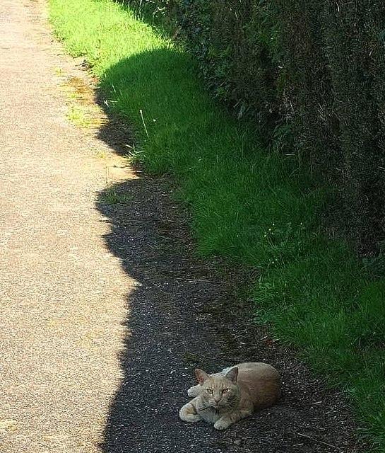 Cat, St Swithun's burial ground, Woodbury