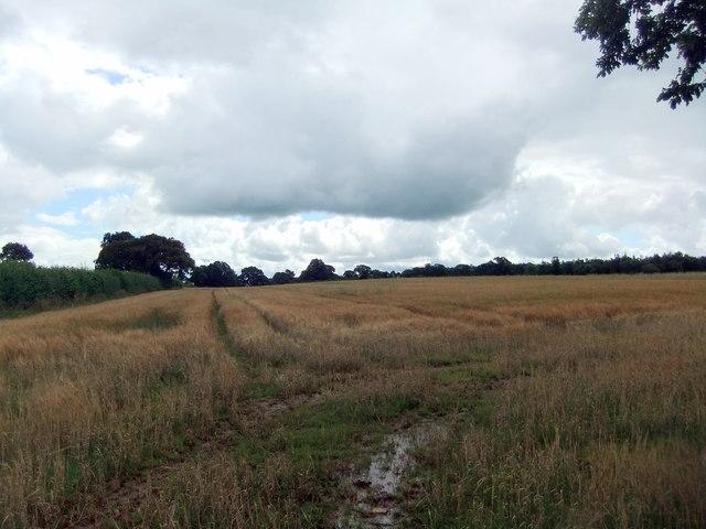 Barley field near Dowgill