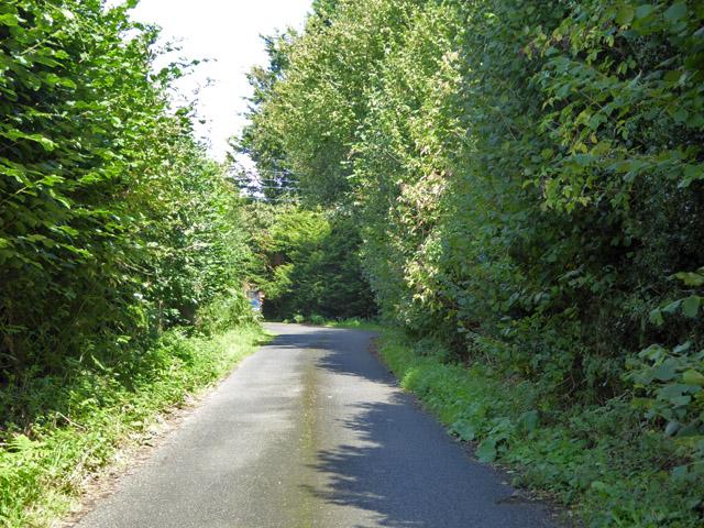 Mile Lane, Iden Green