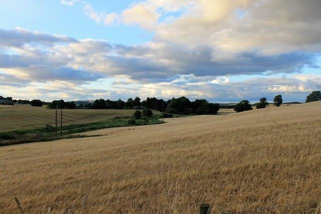 Barley By Lethenty
