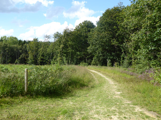 Path in Angley Wood