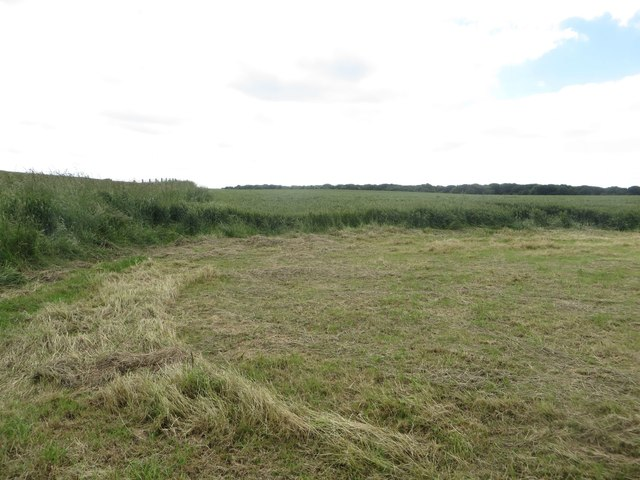 Cliff top arable field