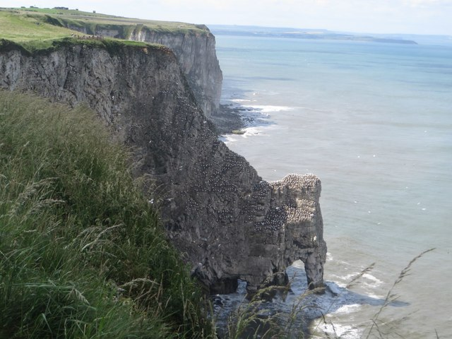 Sea bird colonies on the cliffs of Little Dor