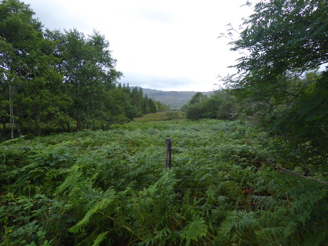 Woodland ride at New Kelso