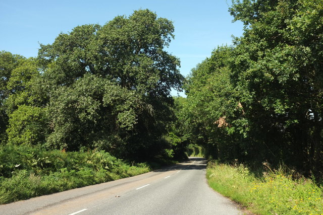 B3179 at Woodbury Wood