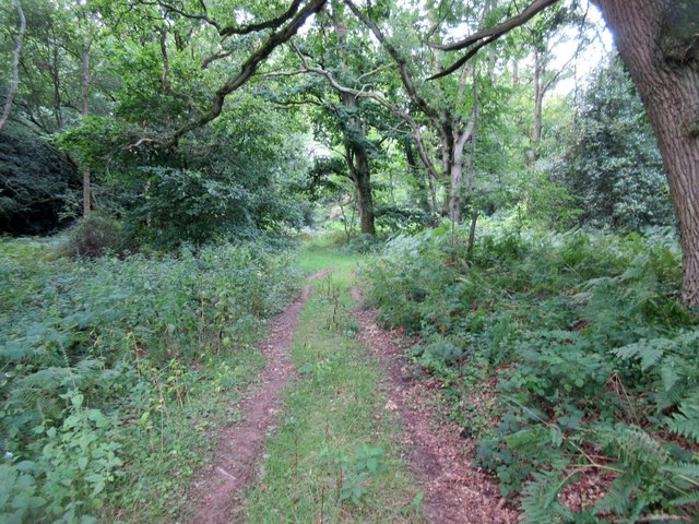 Forest track on Hoads Common