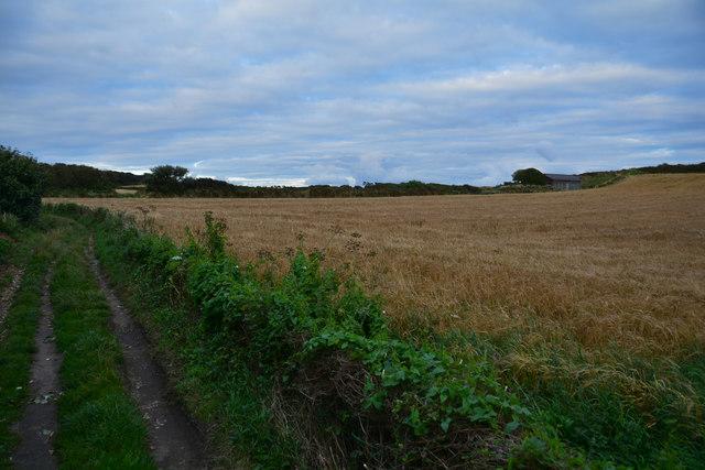 The Mumbles : Grassy Field