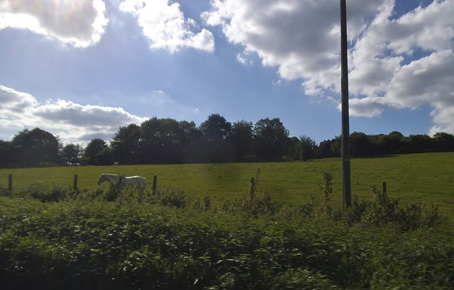 Pasture by Hampden Road near Great Kingshill