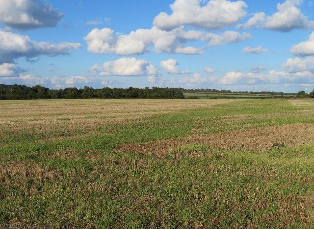 St John's Field - post harvest