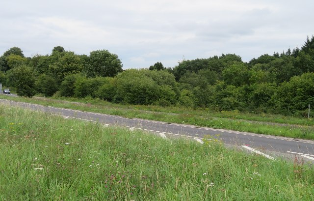 Peak Copse and the A30