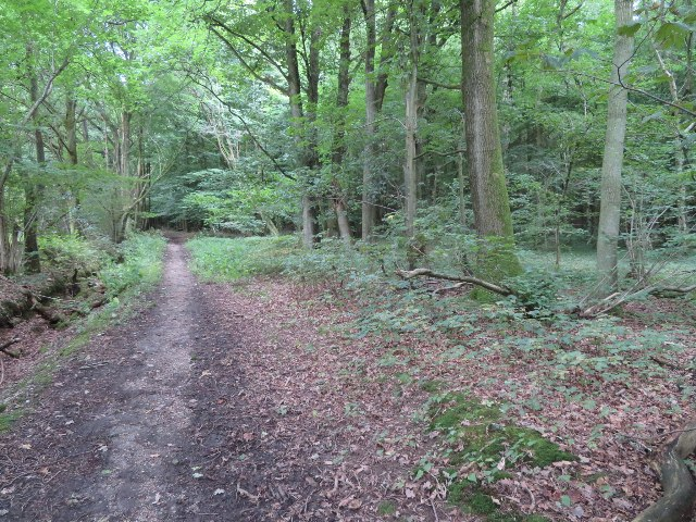 The Wayfarer's Walk - Peak Copse